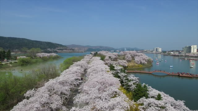 Aerial view of Cherry Blossom treelined and lake