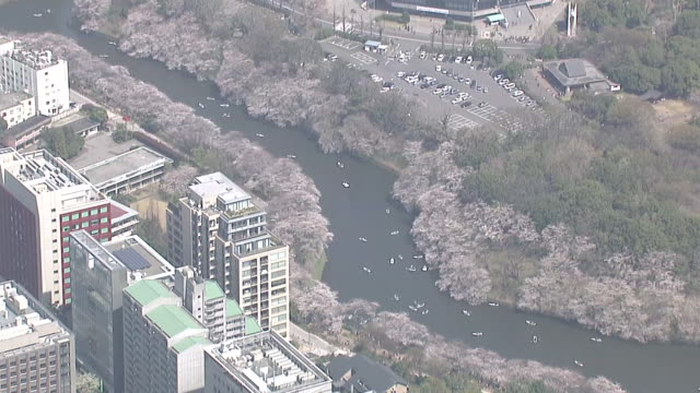 aerial view of chidorigafuchi, tokyo in spring - kanto region stock videos and b-roll footage