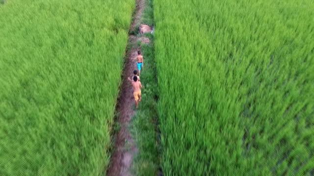 flygfoto över barn som kör i risfält på kvällen. thailändska barn - bar överkropp bildbanksvideor och videomaterial från bakom kulisserna