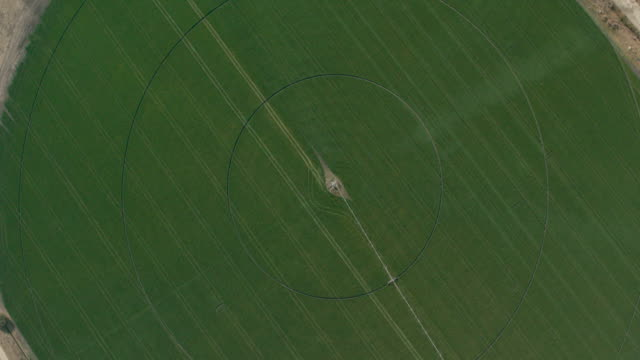 aerial view of circular crop fields - bewässerungsanlage stock-videos und b-roll-filmmaterial
