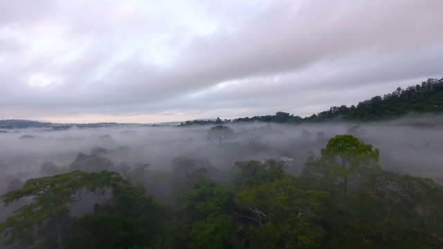 aerial view of clouds covering treetops - nigeria stock videos & royalty-free footage