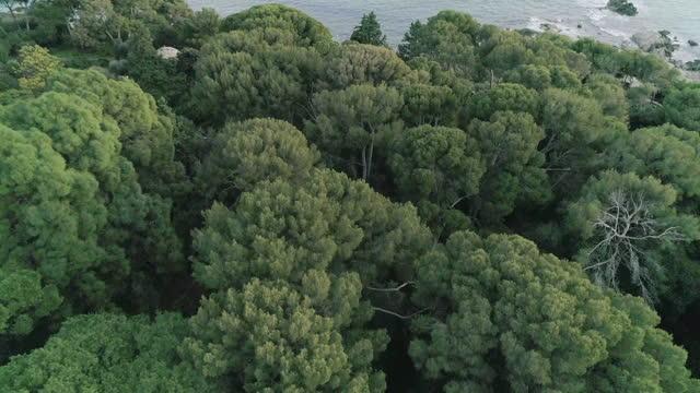 沿岸の岬と森林の空中写真 - 生い茂る点の映像素材/bロール