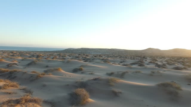 aerial view of coastline, flying low over sandy hillocks with grassy tufts, sunset, animal tracks in sand, namibia, 2015 - dry stock videos & royalty-free footage