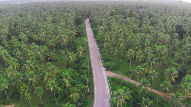 vídeos de stock e filmes b-roll de 4k aerial view of coconut palm tree field. - árvore tropical