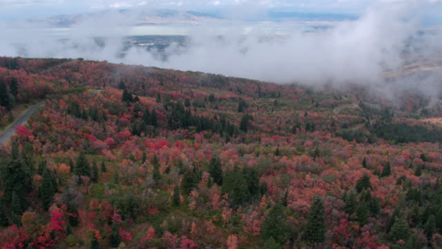 aerial view of colorful foliage on cloudy day - provo stock videos and b-roll footage