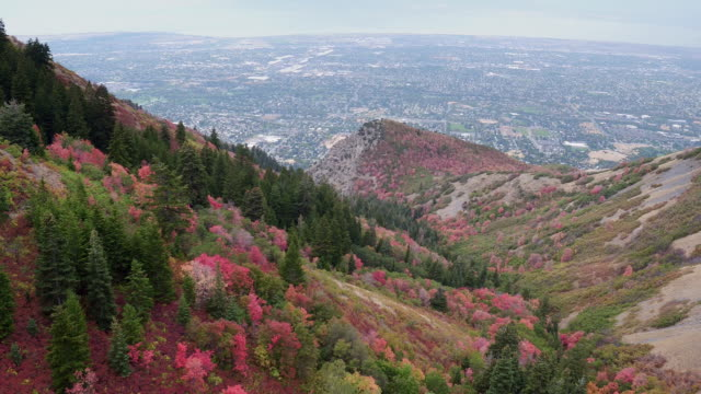aerial view of colorful foliage on hill side above city - プロボ点の映像素材/bロール