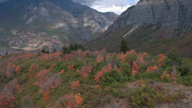 aerial view of colorful foliage on hill top - provo stock videos and b-roll footage
