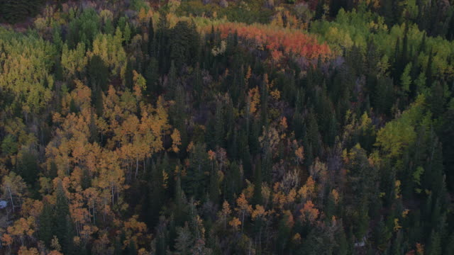 aerial view of colorful forest at dusk - american fork city stock videos & royalty-free footage