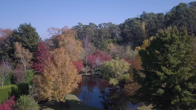 Aerial view of colourful trees with a lake in autumn, Victoria, Australia