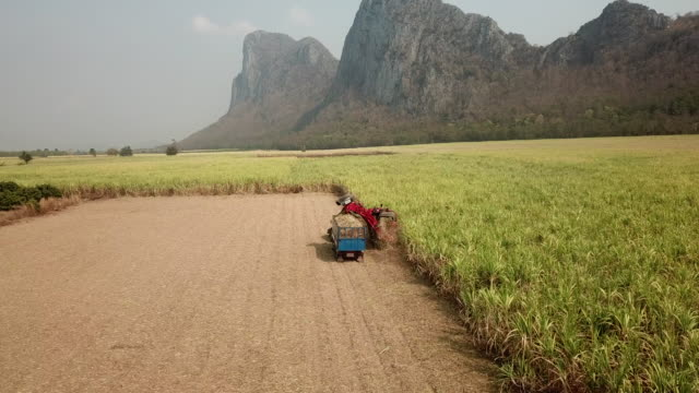 stockvideo's en b-roll-footage met luchtmening van combine harvester in het suikerrietgebied - suiker