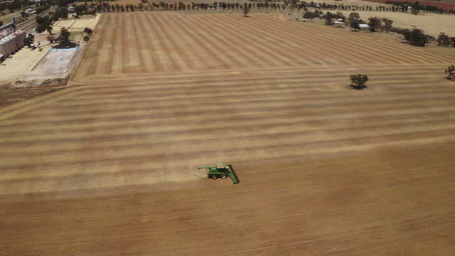 aerial view of combine harvester working in field. - 穀物 ライムギ点の映像素材/bロール