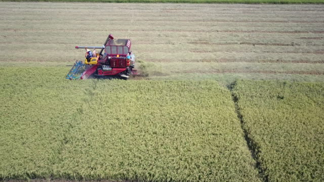vídeos de stock e filmes b-roll de aerial view of combine harvester working on field - maduro