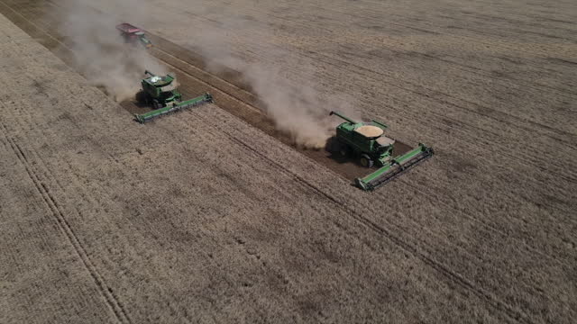 aerial view of combine harvesters in a wheat field near gunnedah, new south wales, australia on thursday, november 12, 2020. media reports suggesting... - cereal plant stock videos & royalty-free footage