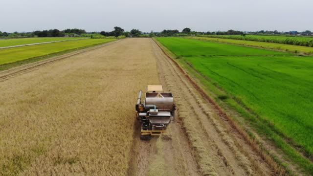 vídeos y material grabado en eventos de stock de vista aérea de cosechadoras en el campo del arroz - campo de arroz