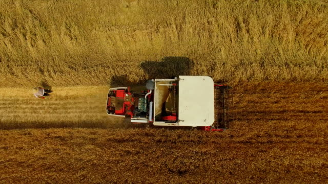 aerial view of combine harvesting wheat,xi'an,china. - tractor stock videos & royalty-free footage