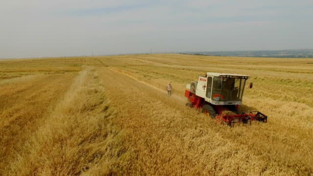 aerial view of combine harvesting wheat,xi'an,china. - harvesting stock videos and b-roll footage