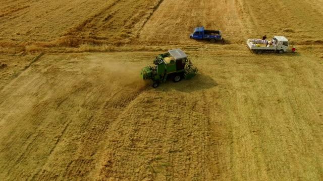 vidéos et rushes de aerial view of combine harvesting wheat,xi'an,china. - tracteur