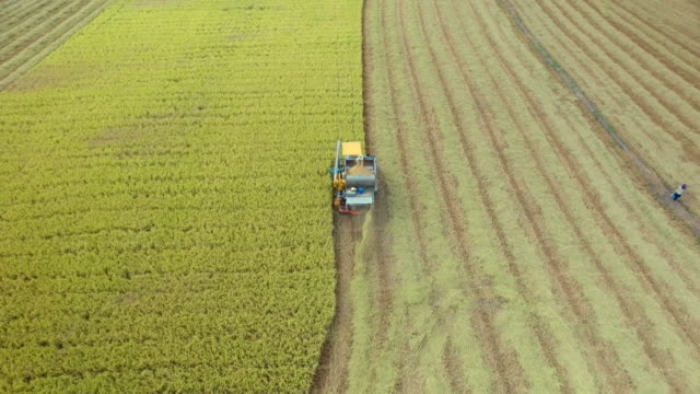 aerial view of combine on harvest field in ayutthaya, thailand - agriculture stock videos & royalty-free footage