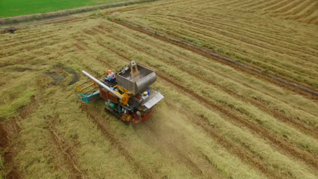 aerial view of combine on harvest field in ayutthaya, thailand - agricultural equipment stock videos & royalty-free footage