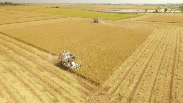 Vista aerea di combinare il raccolto campo a Ayutthaya, in Tailandia
