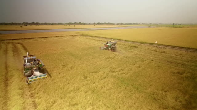 vidéos et rushes de vue aérienne de récolte dans le champ combinent à ayutthaya en thaïlande - récolter