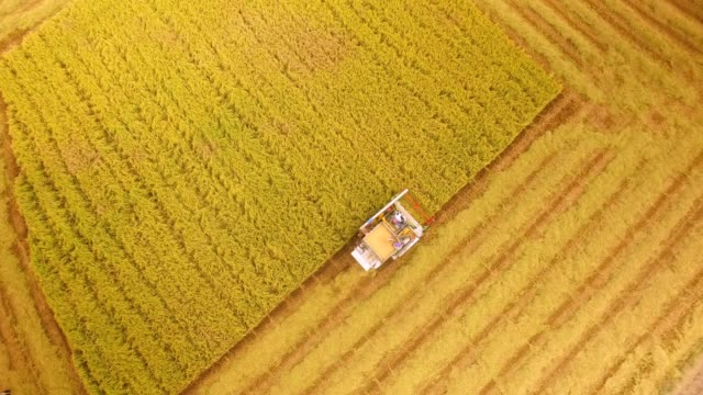 aerial view of combine on harvest field in ayutthaya, thailand - field stock videos & royalty-free footage