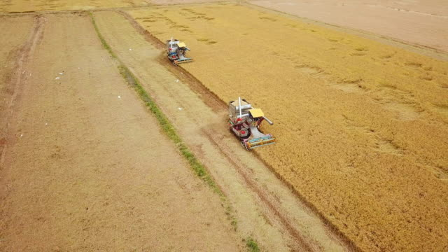 aerial view of combine on harvest field in ayutthaya, thailand - tractor stock videos & royalty-free footage