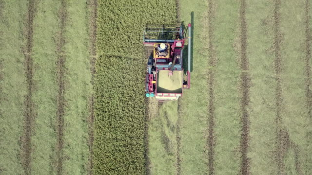 aerial view of combine on harvest field - hay field stock videos & royalty-free footage