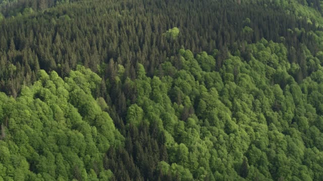 aerial view of coniferous and deciduous forests colliding - deciduous stock videos & royalty-free footage