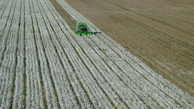 stockvideo's en b-roll-footage met aerial view of cotton picker in cotton field - field