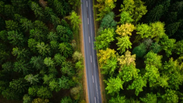 Luftaufnahme der Landstraße durch Wald