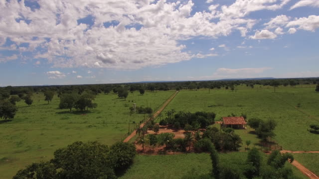 aerial view of cowboys herding cattle in goias state, brazil - cerrado stock videos & royalty-free footage