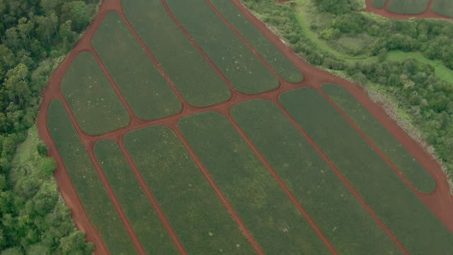 aerial view of crop farming near kahuku on the north shore of oahu, hawaii. - turtle bay hawaii stock videos & royalty-free footage