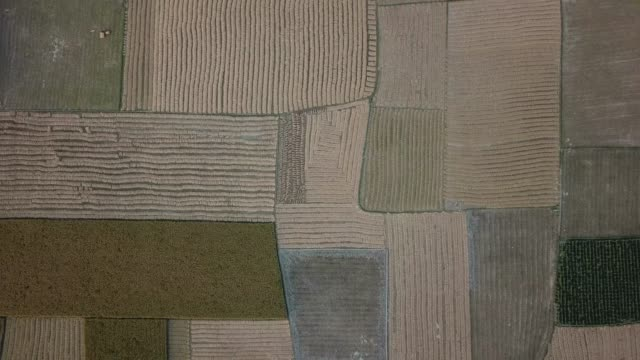 aerial view of cropland bangladesh - ganz oben stock-videos und b-roll-filmmaterial
