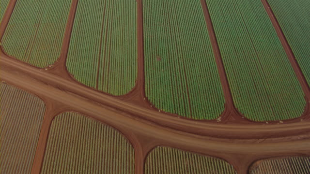 aerial view of crops near kahuku on the north shore of oahu, hawaii. - turtle bay hawaii stock videos & royalty-free footage