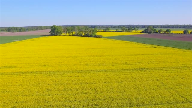 aerial view of cultivated land and rapeseed field near by damnatz in in the district lüchow-dannenberg in lower saxony - germany - oilseed rape stock videos & royalty-free footage