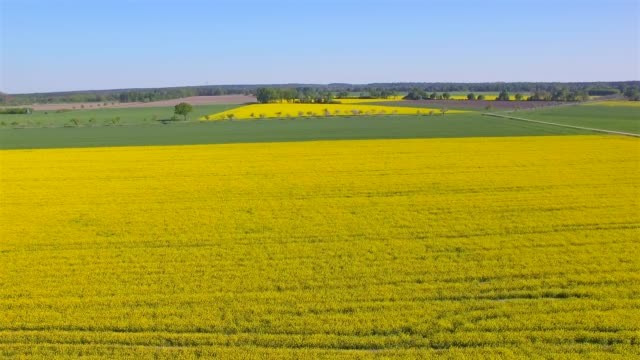 aerial view of cultivated land and rapeseed field near by damnatz in in the district lüchow-dannenberg in lower saxony - germany - canola stock videos and b-roll footage