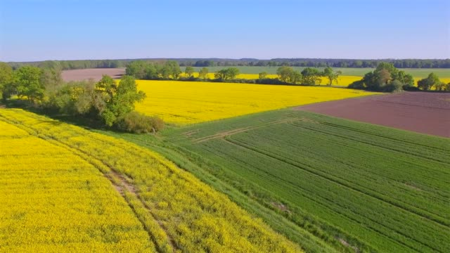 aerial view of cultivated land and rapeseed field near by damnatz in in the district lüchow-dannenberg in lower saxony - germany - rapeseed oil stock videos and b-roll footage