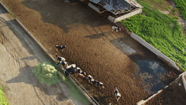 Aerial View of Dairy Farm
