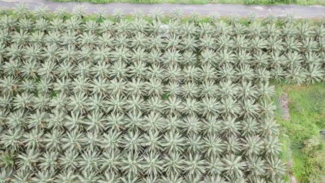 植物の日付ヤシの木の空中写真 - サウンドトラック点の映像素材/bロール