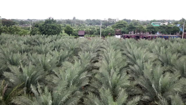 aerial view of date palm tree in the plant - mid section stock videos & royalty-free footage