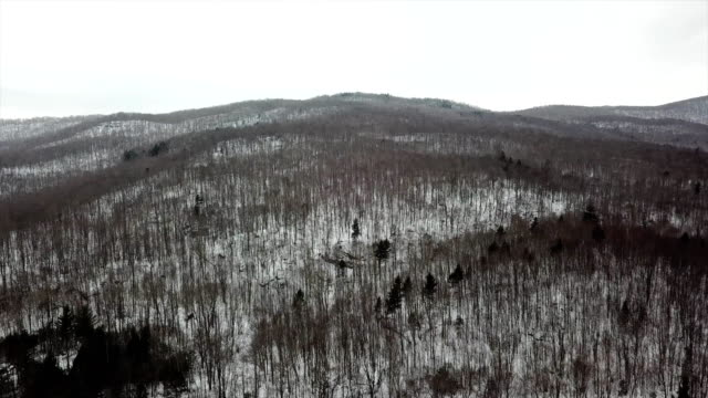 aerial view of dead trees of winter in bolton vermont - vermont stock-videos und b-roll-filmmaterial