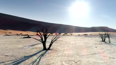 aerial view of dead vlei in sossusvlei - africa stock videos & royalty-free footage