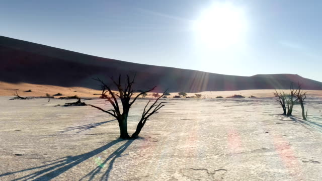 aerial view of dead vlei in sossusvlei - terreno video stock e b–roll