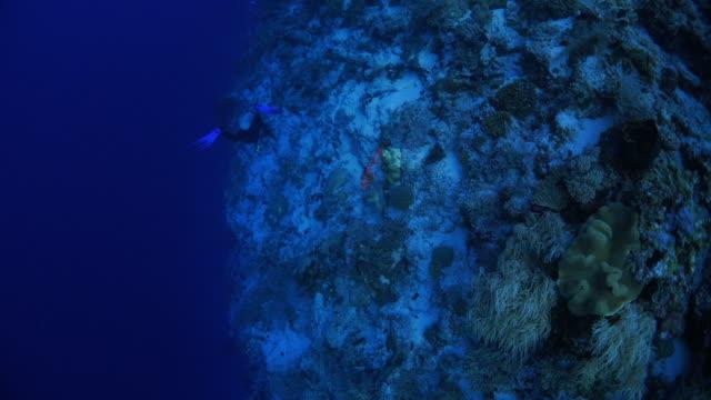 Aerial view of deep sea reef