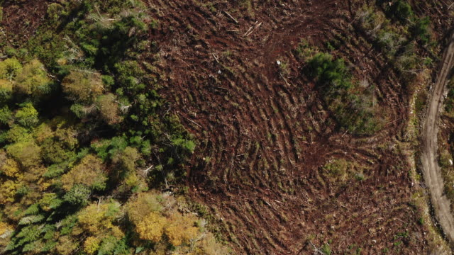 aerial view of deforestation area in boreal forest, canada - timber stock videos and b-roll footage