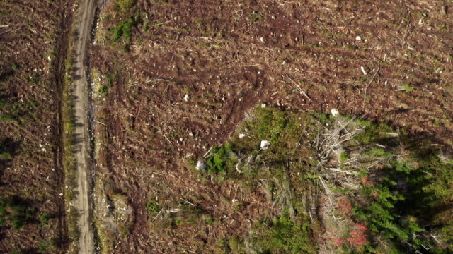 aerial view of deforestation area in boreal forest, canada - industria forestale video stock e b–roll