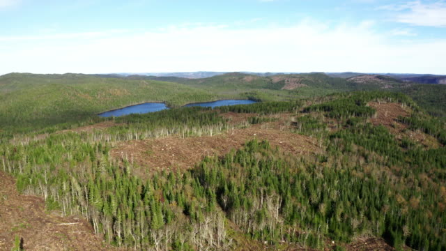aerial view of deforestation area in boreal forest, canada - boreal forest stock videos and b-roll footage