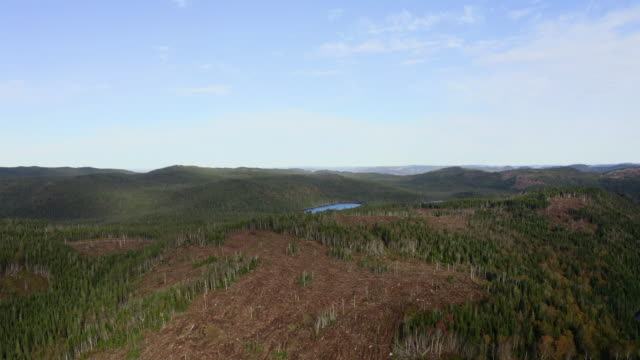 aerial view of deforestation area in boreal forest, canada - forestry industry stock videos & royalty-free footage