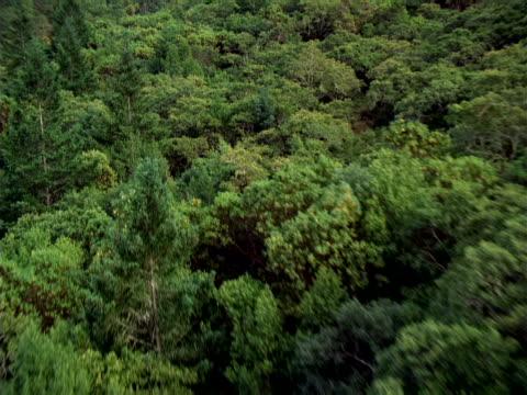 aerial view of dense forest - 硬木の木点の映像素材/bロール
